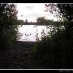 The Swamp Swim